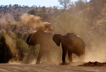 Day Tours And Trips In Cape Town Joburg Durban And
