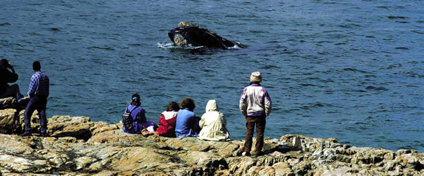Whale watchingfrom the Shore