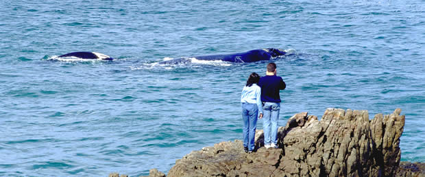 land based whale watching in Walker Bay, Hermanus