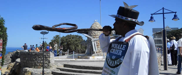 Whale Crier of Hermanus